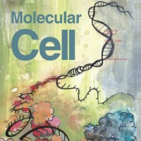 Cover Illustration - Molecular Cell